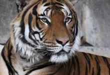 Tierpark, lo Zoo di Berlino meno conosciuto