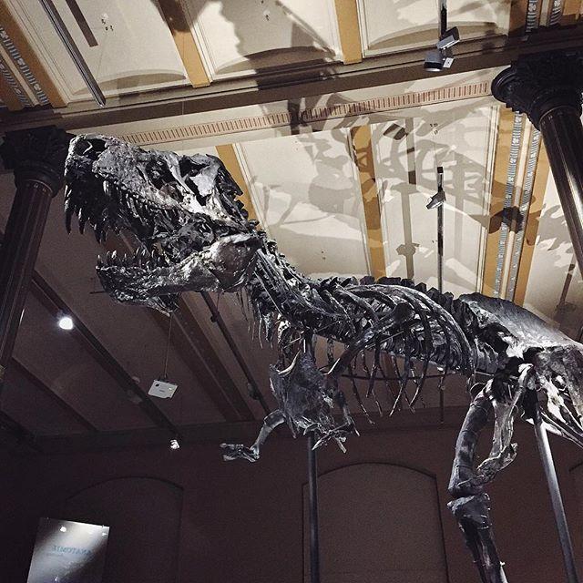 naturkundemuseum berlino