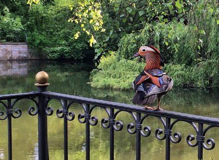 Berlino segreta: Gemeindepark Lankwitz
