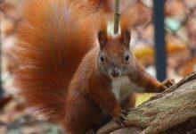 Gli animali selvatici di Berlino: chi sono e dove trovarli