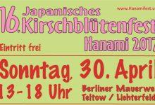 Kirschblütenfest Teltow: I ciliegi in fiore