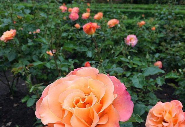 Luoghi romantici di Berlino: il Rosengarten di Wedding