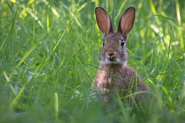 i conigli del muro di berlino