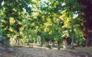 Castagneti del Parco di Roccamfina