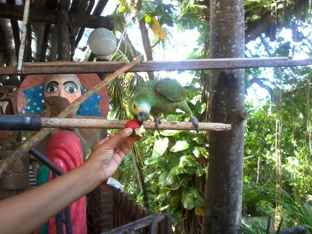 un pappagallino con il quale ho fatto amicizia in una bottega d'arte di Olinda