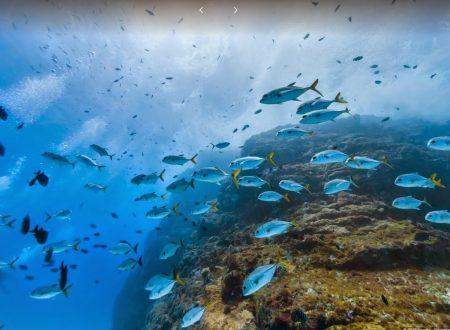 Street View ci porta sott'acqua tra i delfini delle isole Brasiliane FOTO