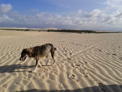 Piccolo amico sulle dune di Jeri