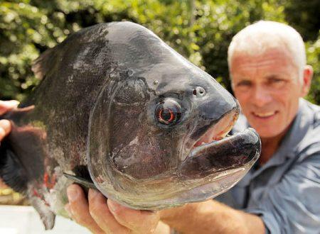 River Monsters Amazzonia