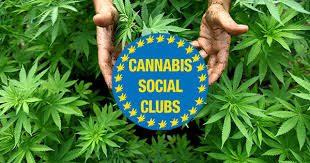 Cannabis Social Club: ecco come funzionano