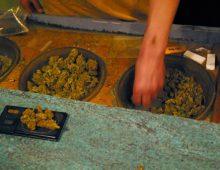 Fate attenzione: la cannabis in Spagna NON è legale!