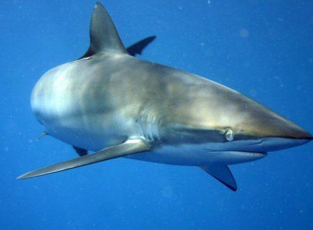 8 specie marine pericolose che vivono alle Canarie