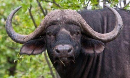 Le bufale degli italiani che non vogliono altri italiani a Tenerife
