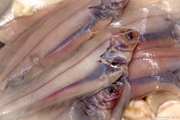 Non poteva mancare anche il pesce (foto Paolo Bergomi)