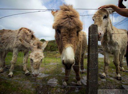 Nasce Irlanda visionaria: visita a Brow head e Barleycove