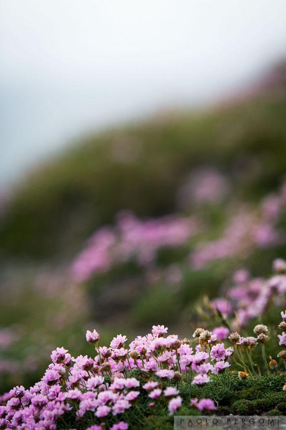 Brow Head, flora