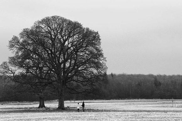County Kildare, 2013, inverno