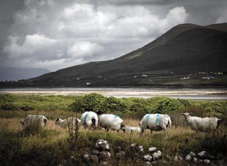 L'atmosfera sognante della campagna irlandese (2)