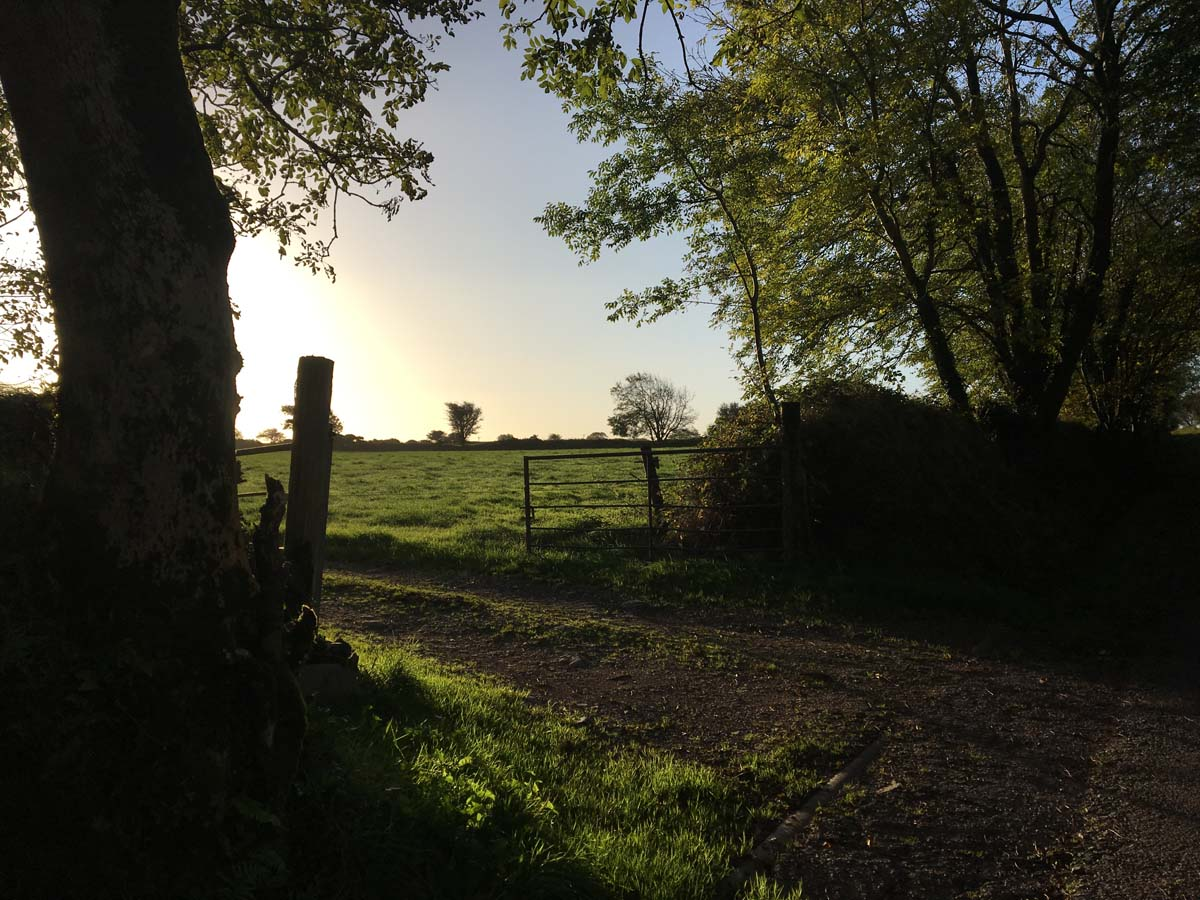 Matthew Hill, la luce di una mattina autunnale