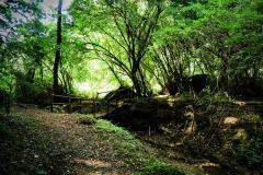 sentiero per l'eremo di poggio conte