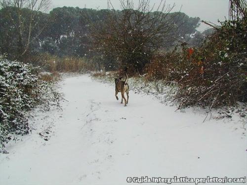2010-la-neve