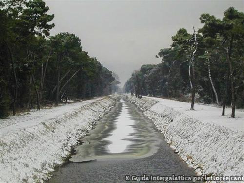bufalina-con-neve
