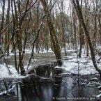 Il parco di Migliarino San Rossore : la porta di Narnia dietro casa