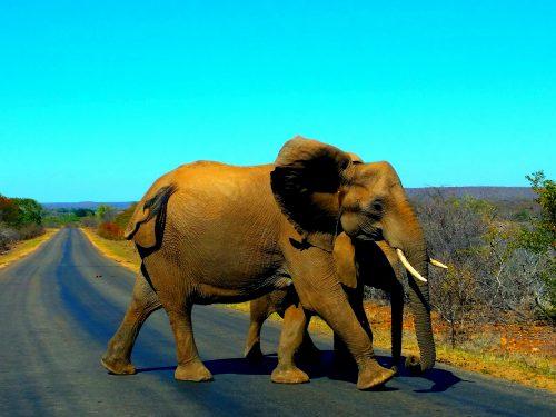 Sudafrica: Safari in autonomia nel Kruger National Park in Sudafrica