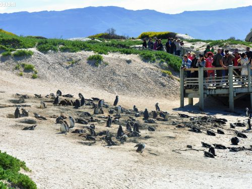 Sudafrica: Muizenberg, Boulder's beach e Capo di buona speranza
