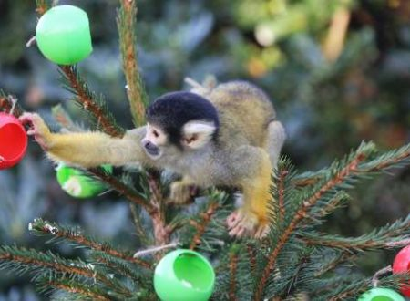 Candele, giardini e volpi: Natale alternativo 2014 a Londra
