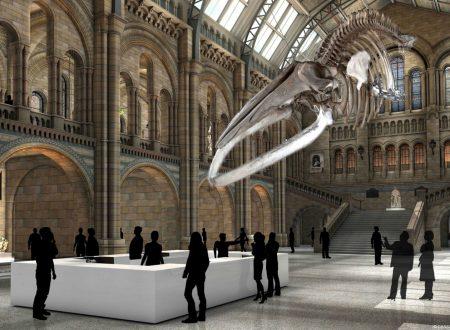 Natural History Museum: dinosauro o balenottera?