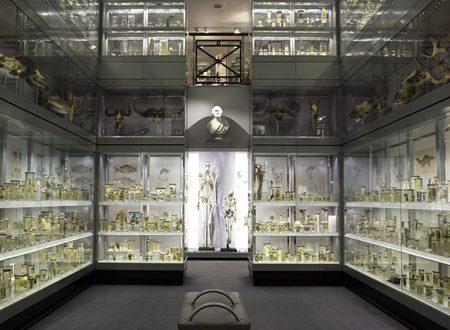 Londra gratis: musei che non hai ancora visitato