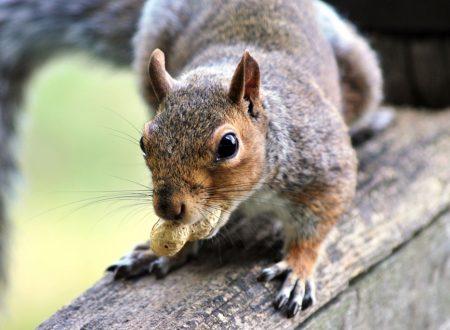 Guida agli scoiattoli di Londra