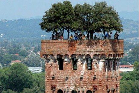 Torre Guinigi, un giardino ad alta quota nel centro di Lucca