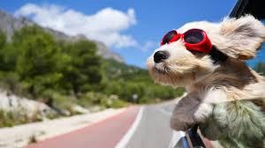 Trip For Dog spiagge bau