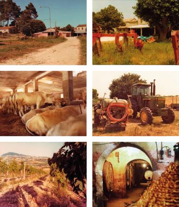03_foto_azienda_agricola_aventi_1982