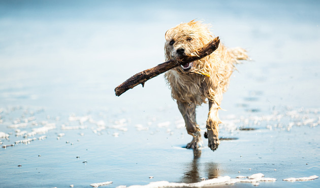spiagge per cani latina
