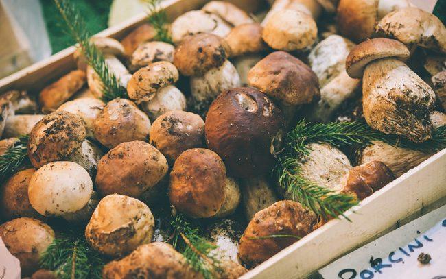 Come e dove raccogliere funghi nel Parco Nazionale del Circeo