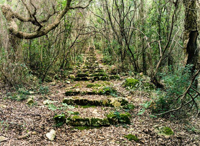 Il sentiero del Vecciaro al Parco del Circeo