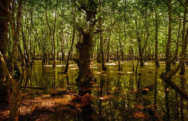 Piscine della verdesca passeggiata nel bosco come arrivare for Piani del padiglione della piscina