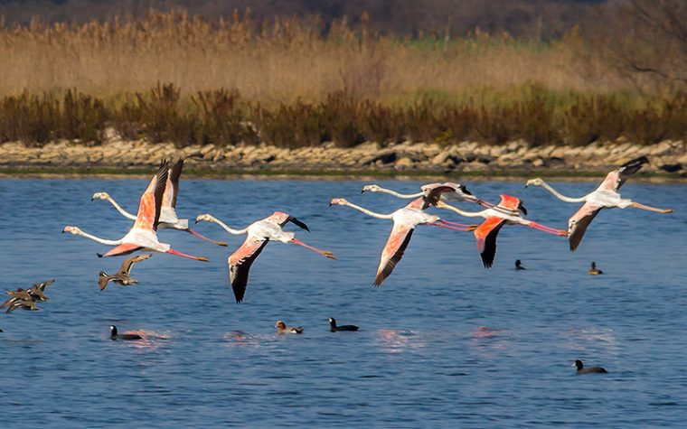 Birdwatching al Circeo
