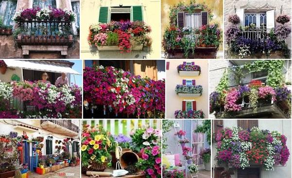 balconi in fiore foto principale