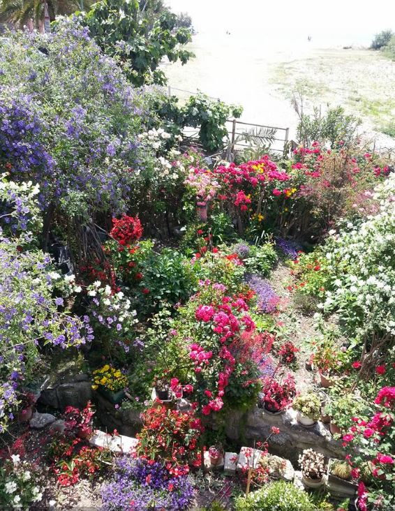 fiori patrizia franzè