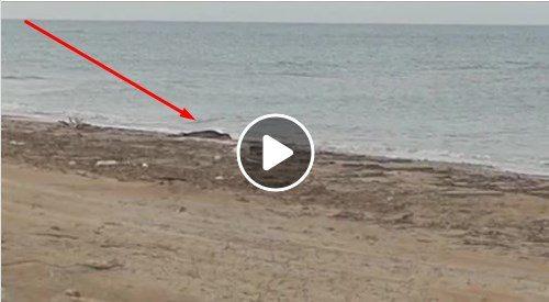 Incredibile..!! Una foca in spiaggia in provincia di Lecce.