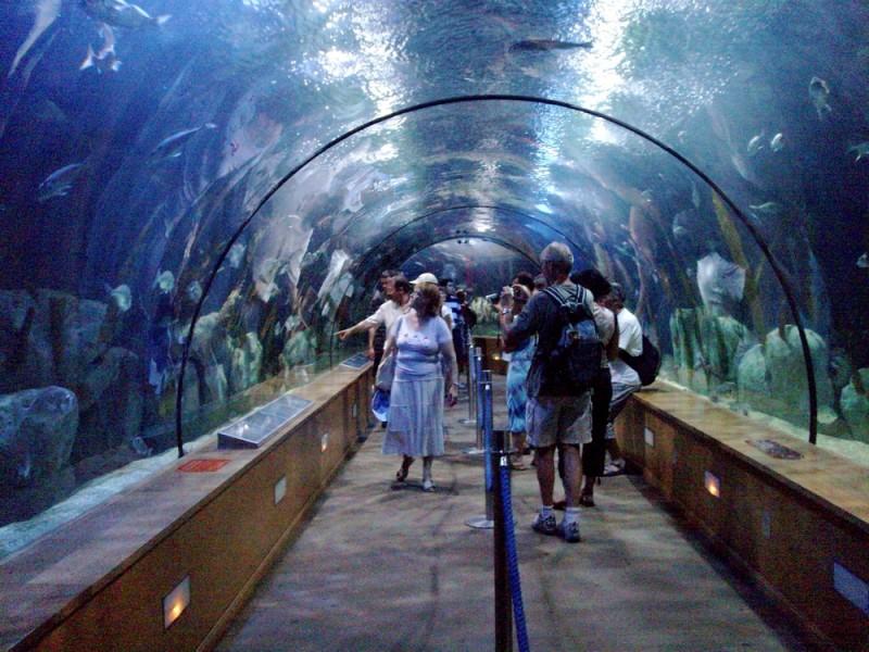 Valencia - museo oceanografico