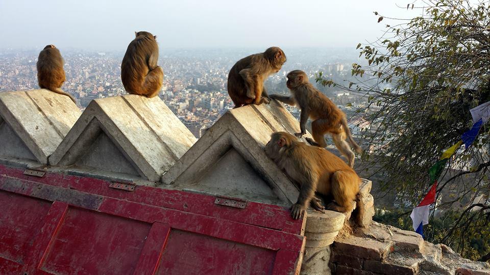 Kathmandu paesaggio dalla collina