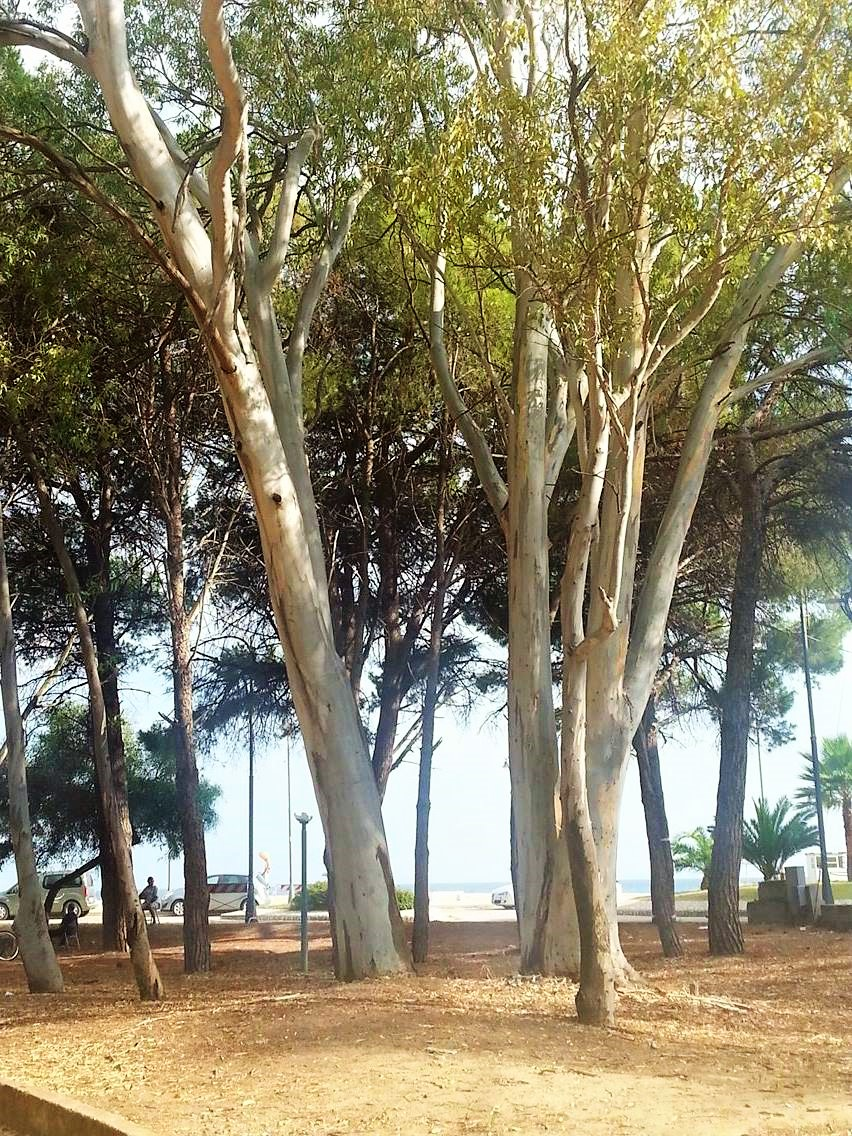 Pineta - Sellia marina