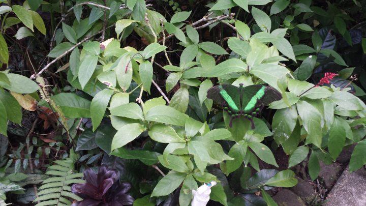 farfalla dell'eco garden a puerto princesa