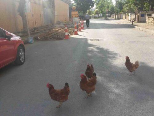 Le mie nuove vicine di casa (a Istanbul)