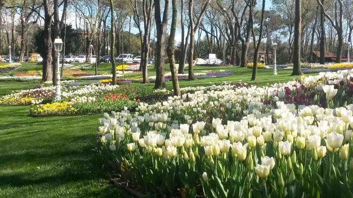 Tulipani201601