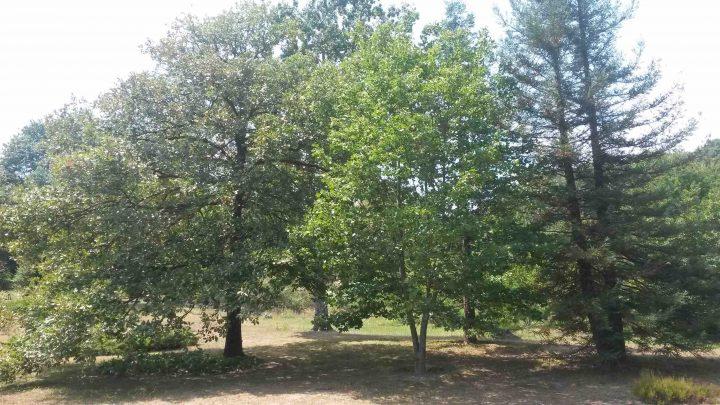 Arboretum03